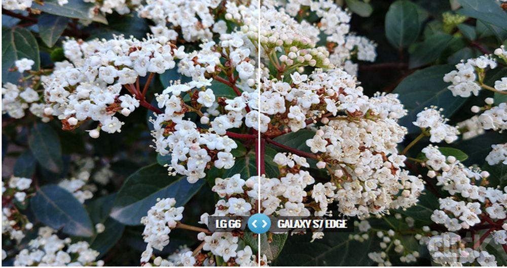 مقایسه دوربین گوشیهای هوشمند LG G6، گلکسی S7 Edge، آیفون 7 پلاس و LG V20