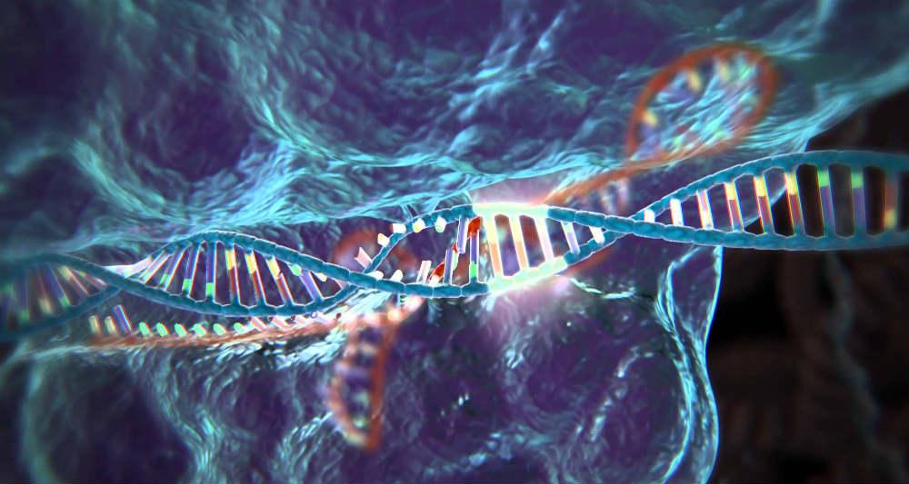 CRISPR Gene