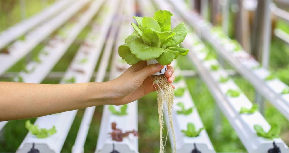 تکنولوژی جدید ژاپنی در خدمت کاشت میوه و سبزی بدون خاک