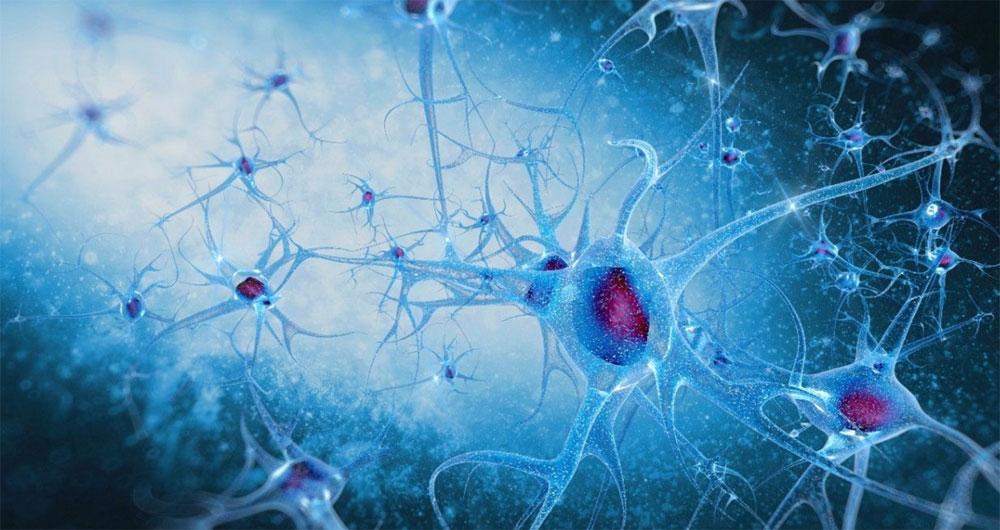 ثبت خاطرات بر روی سلول ها
