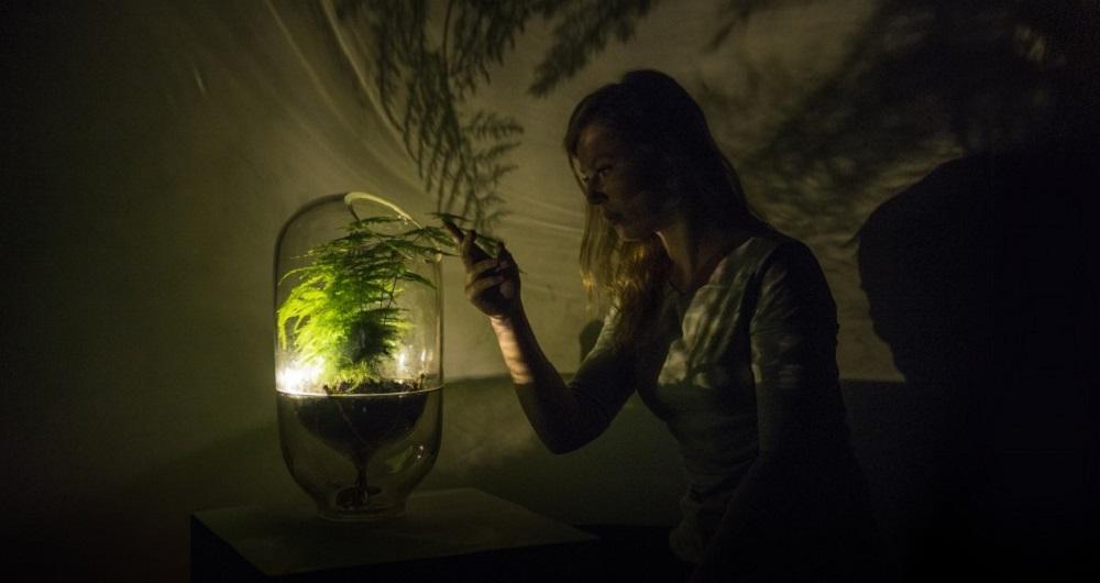 به این گیاه آب دهید تا برق داشته باشید!