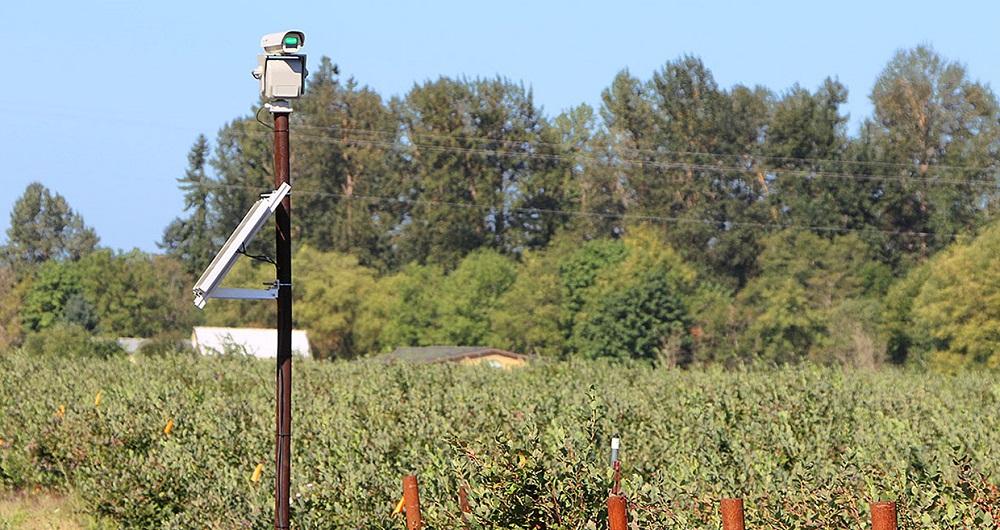کاربرد لیزر در مزارع
