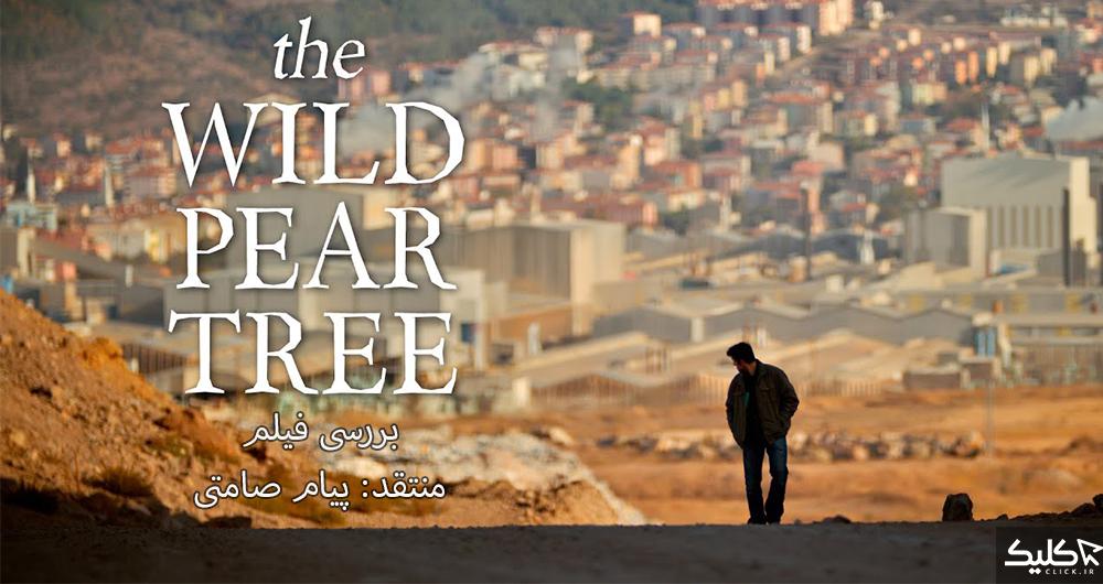 بررسی فیلم The Wild Pear Tree