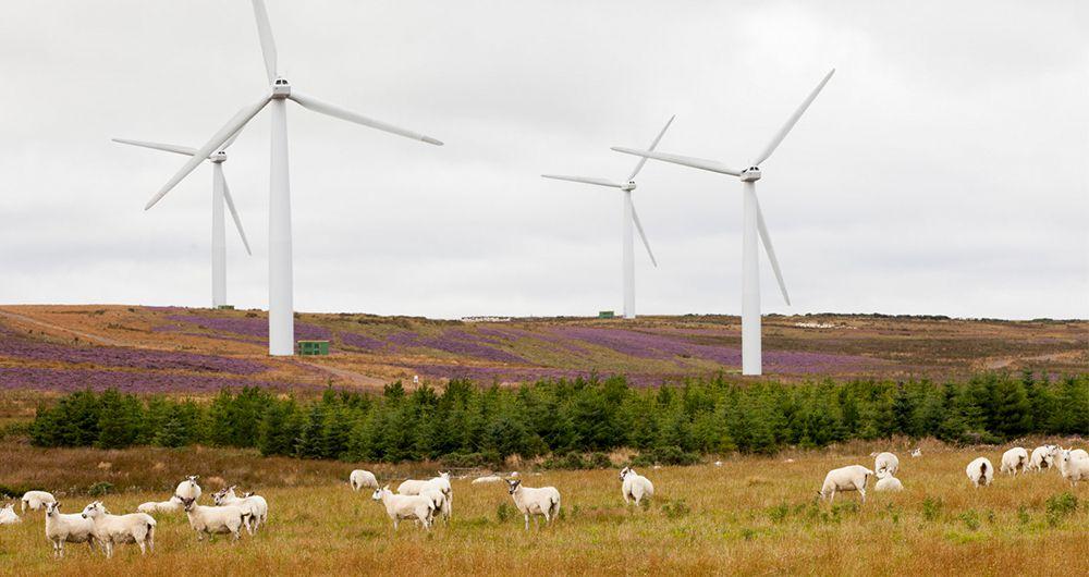 اسکاتلند موفق به تامین انرژی تمام منازل از طریق توربین بادی شد