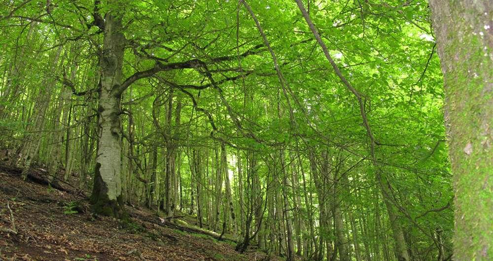 با بزرگترین و قدیمی ترین جنگل های ایران آشنا شوید!
