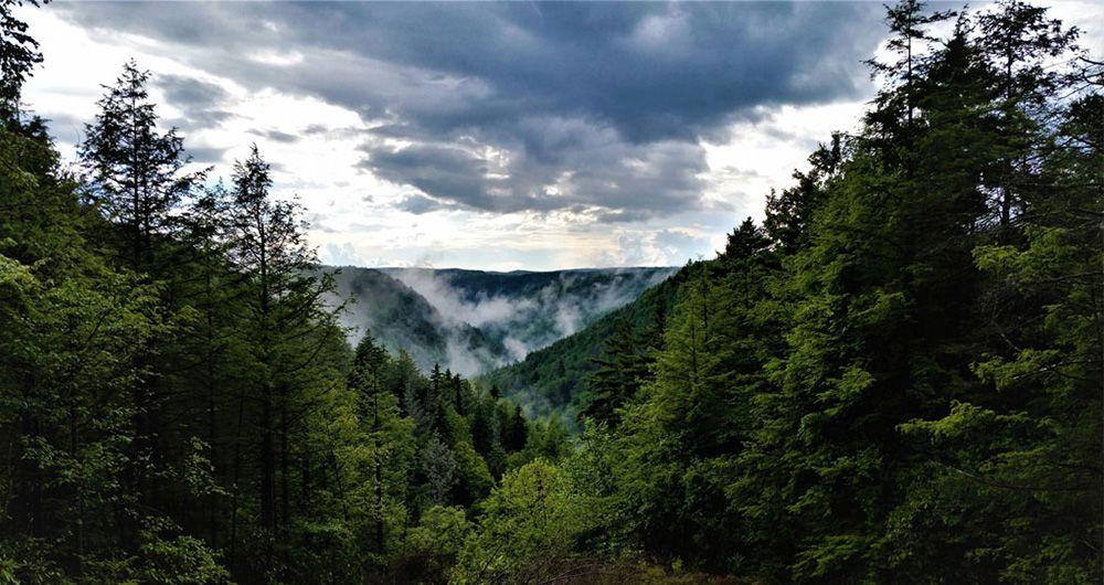 باران اسیدی ممکن است درختان را تشنه تر کند!