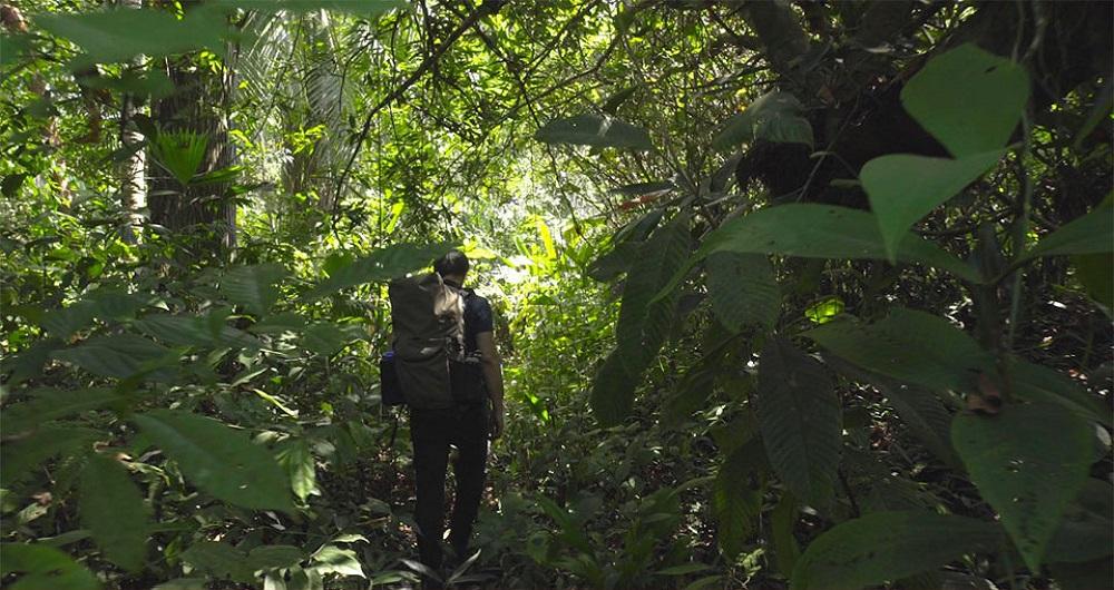 هوش مصنوعی و گوشیهای قدیمی هواوی به کمک جنگل ها می آیند