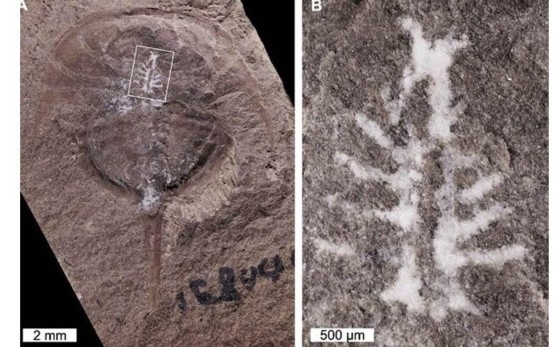 فسیل یک مغز سالم ۳۱۰ میلیون ساله