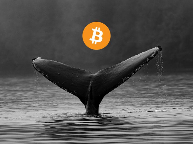 خروج 6 هزار بیت کوین از یک بایننس توسط یک نهنگ