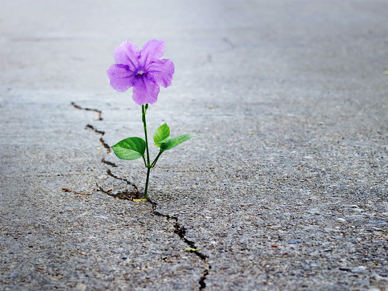 کاهش امید به زندگی