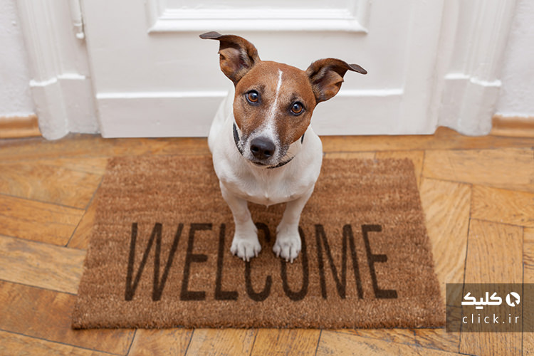 شروط نگهداری سگ در مجتمع مسکونی