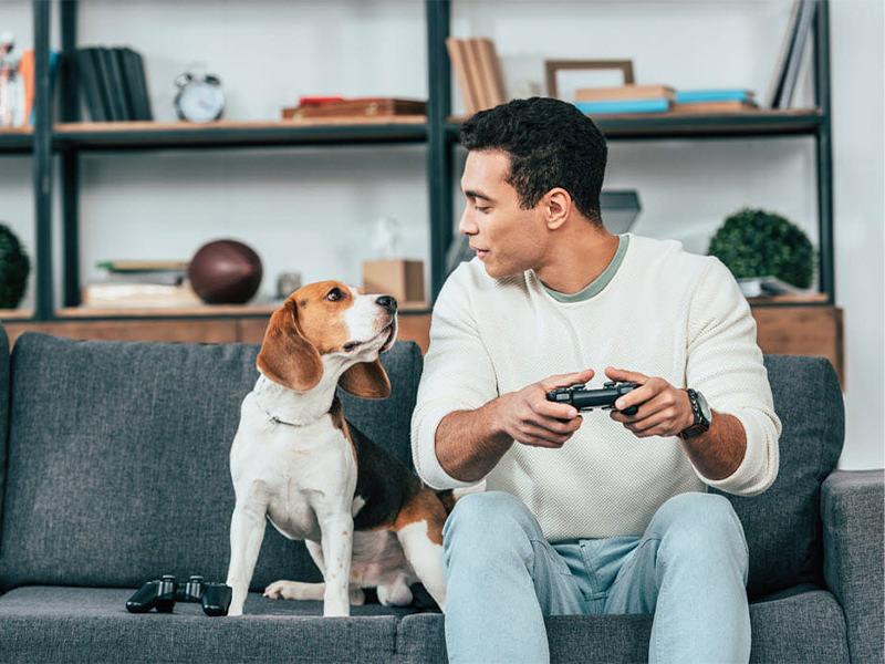 قوانین نگهداری سگ در آپارتمان